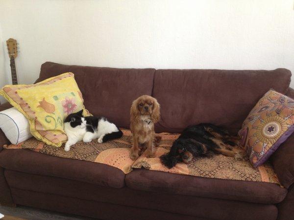 Sur le canapé tout les 3