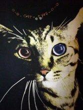 <O><O> CAT-eYes <O><O>