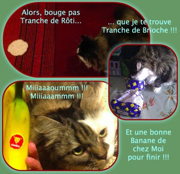 <O><O> Art.242 - Mes Amis et Mon Lion <O><O>