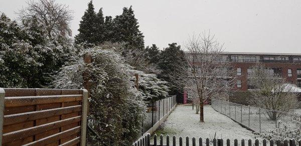 Bon dimanche sous la neige, photo de mon jardin ce jour