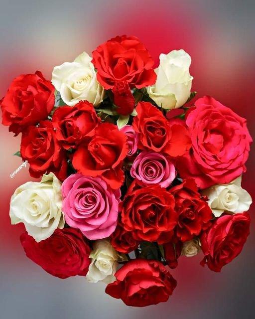 Bon anniversaire de mariage pour mon amie Nadine Cibeline en lui souhaitant encore plein d'années encore