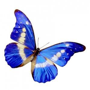Ooo-** La petite chenille c tansformé en papillon **-ooO