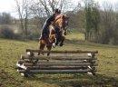 Photo de x-cheval-passion-x3