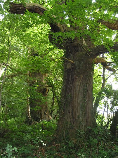 Protégez la forêt