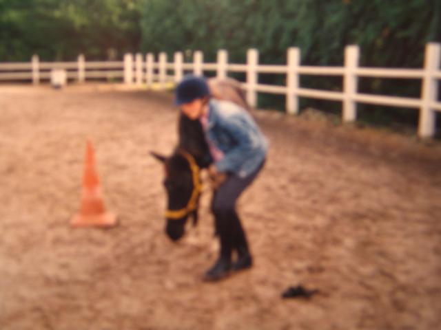 Les poneys et Chevaux