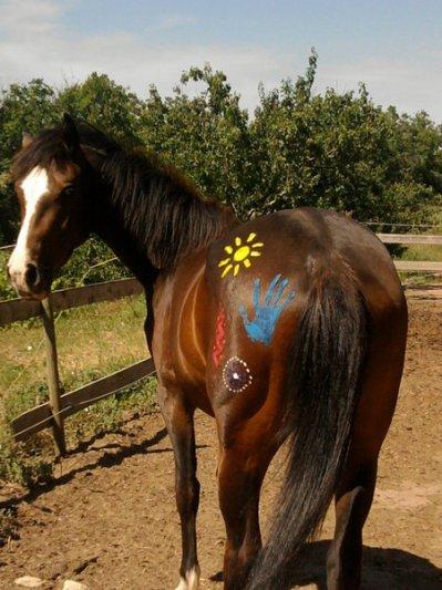 Poney Indien