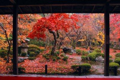 Les saisons au Japon