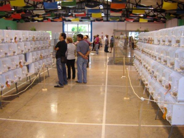 Concurso Internacional de Vecindario - Autonómico de Canarias