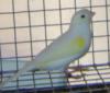 aviariojealsu