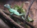 Photo de coin-reptile