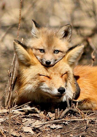 blog de renard-des-bois - blog de renard-des-bois