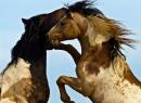Photo de Fiction-Equestre