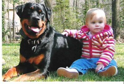 aspect général et comportement - le pedigree