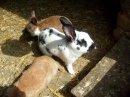 Photo de rabbitcity