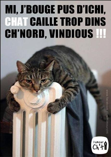 Il fait toujours très froid, un temps à ne pas mettre un chat dehors!