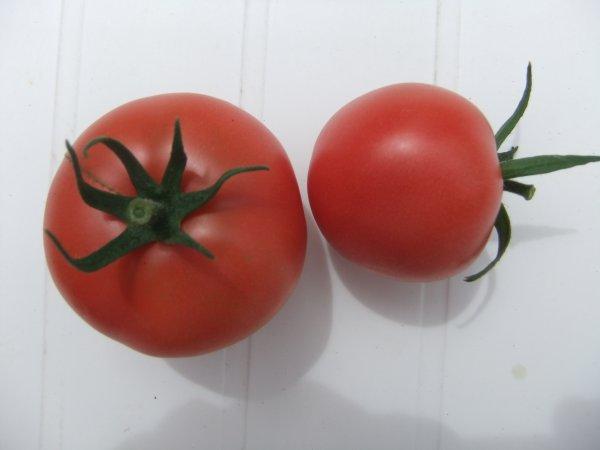 Ca y est! Premières tomates du jardin!