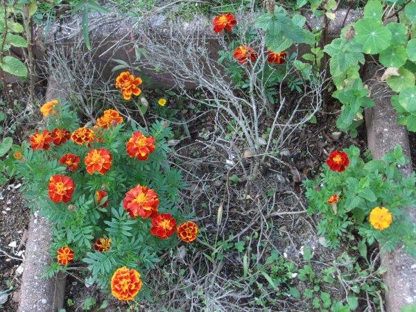 Bonne semaine à tous, avec quelques fleurs de mon jardin!