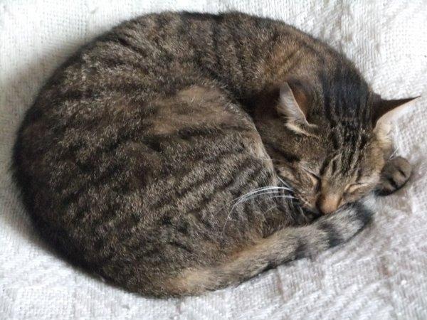 C'est fatigant la vie de chat!