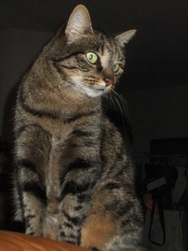 Après Mimine la semaine dernière, ce soir, c'est Moumoune qui prend la pose!