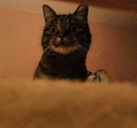 Qu'a bien pu voir ma Moumoune?