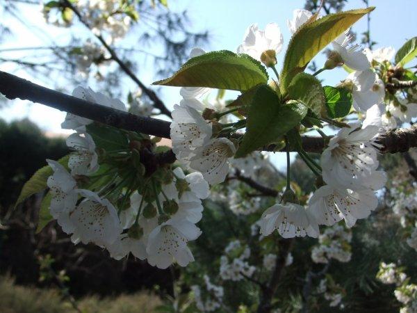 Le printemps!