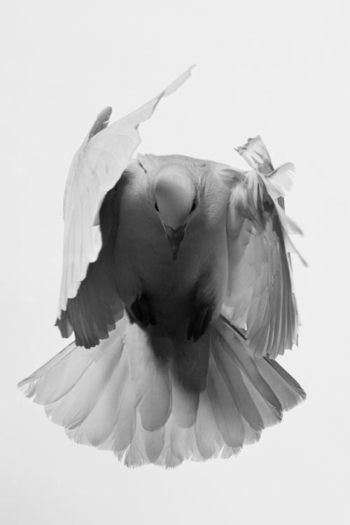 Petit oiseau peut plus voler, à cause du whisky il est bourré.