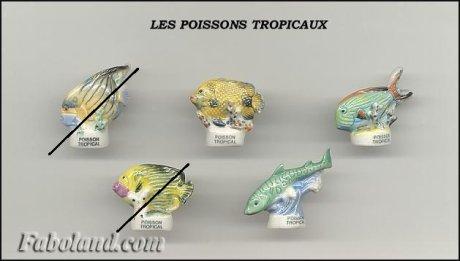 Recherche Poissons Tropicaux