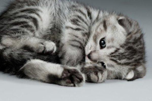 Turbo Les chat trop mignon - Annonces chatons BK54