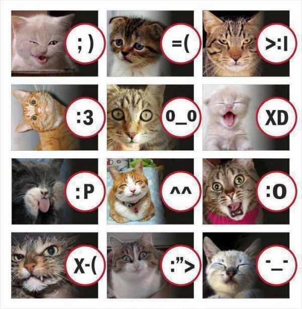 tableau des catsmilets