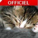 Photo de chat-goutiere
