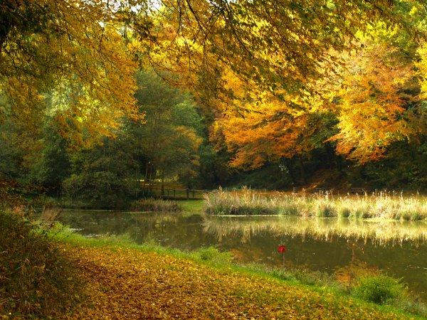 Lumiére d'automne