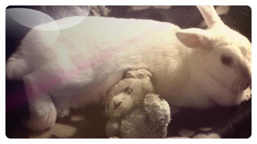 daisy , déjà 4 mois sans toi