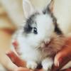 BunnyFeeling