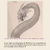 ♂ The Basilisk - Art Concept