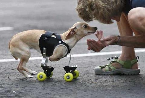 jeu paralympique pour chien