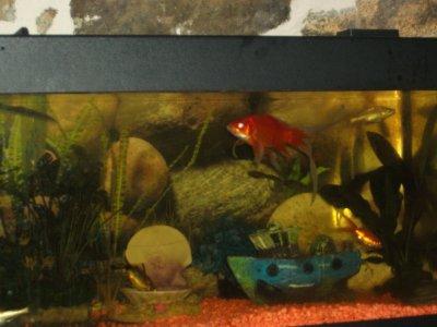 l aquarium;le voile de chine