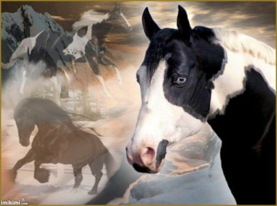 MONTAGE CHEVAUX