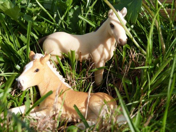 Présentation des chevaux: les poulains