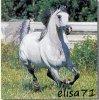 elisa-71