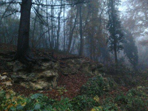 Forêt du Noyonnais