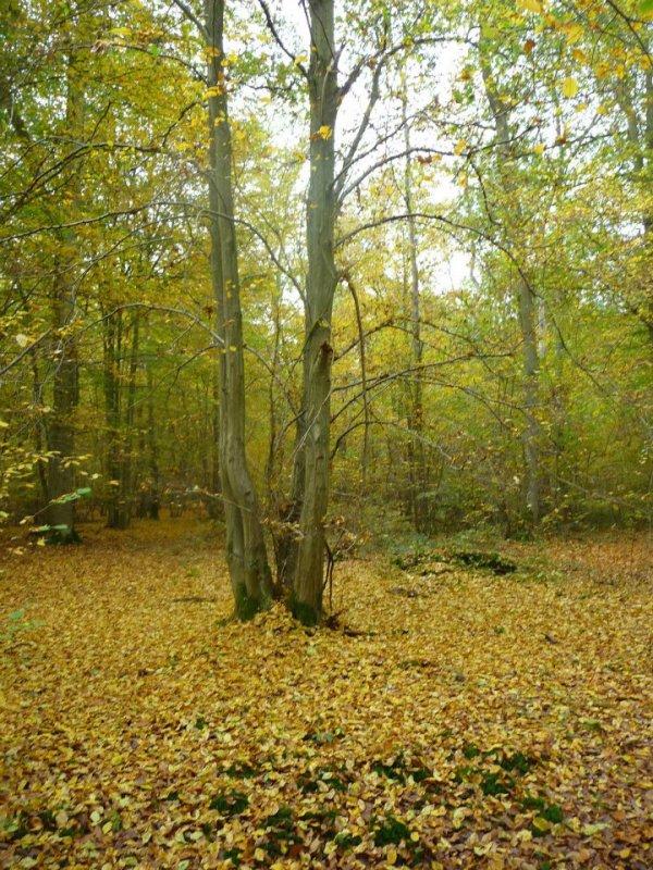 Forêt de Blérancourt
