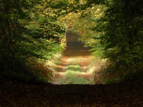 Compiègne - Chemin forestier