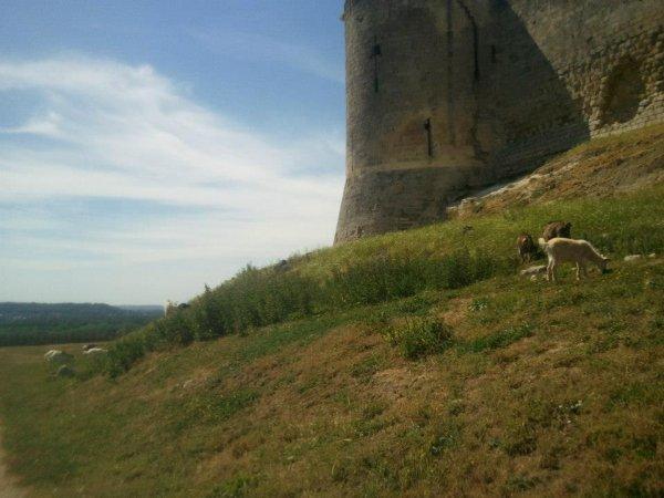 Coucy le château