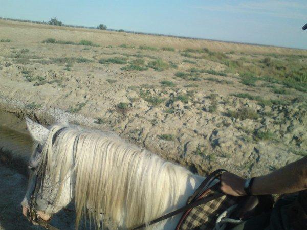 Camargue - balade à cheval