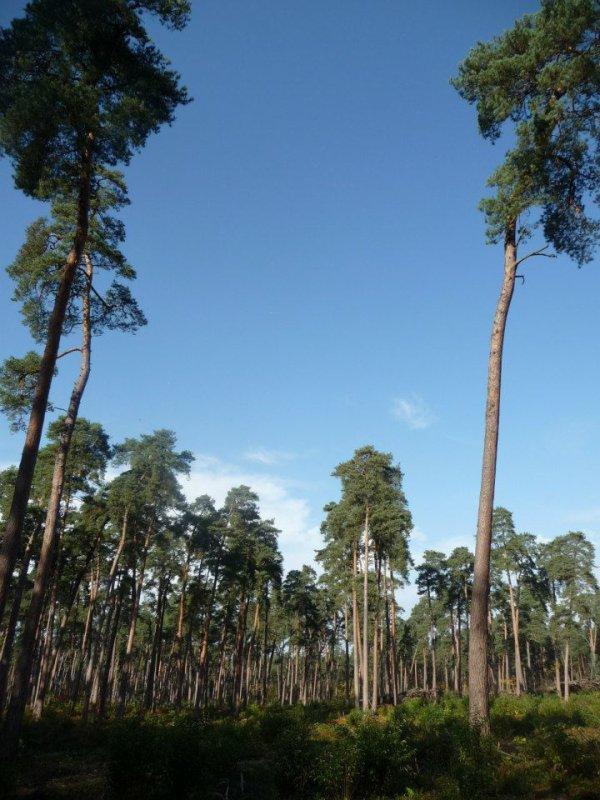 Forêt de Saint-Jean-Aux-Bois