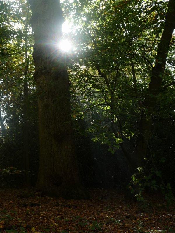 Forêt de Compiègne - éclaircie