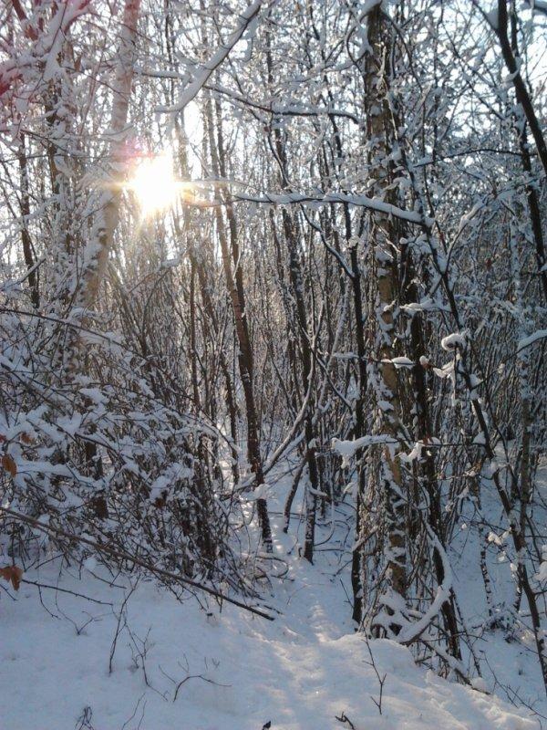 Le bois Blanc
