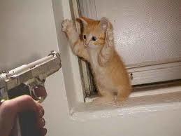 Que ferais-tu à la place du chat ?