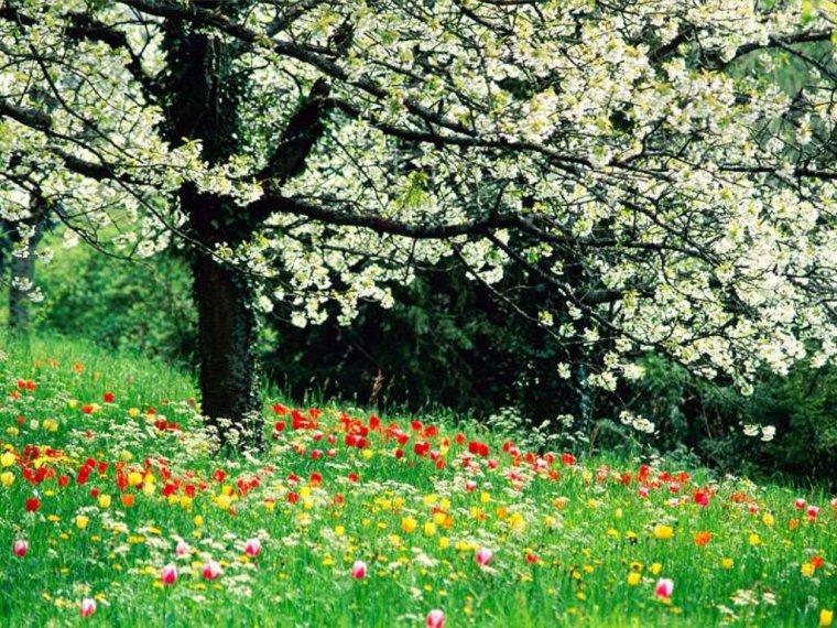 Le printemps est enfin arrivé !