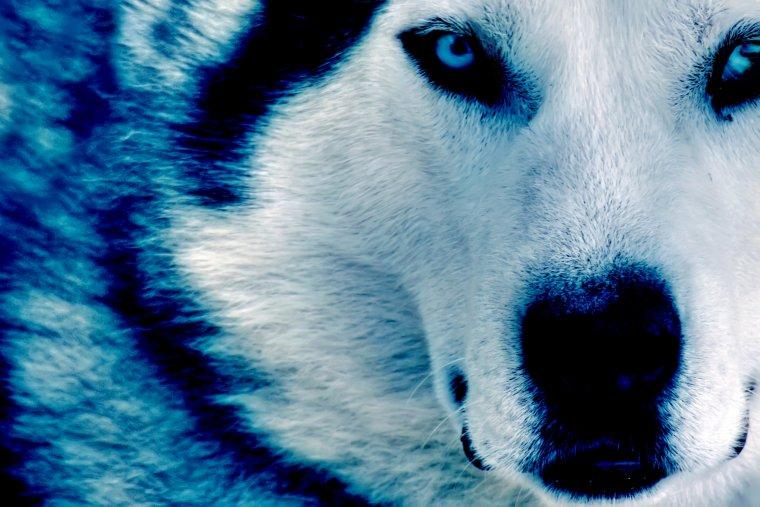 Les petits loups...
